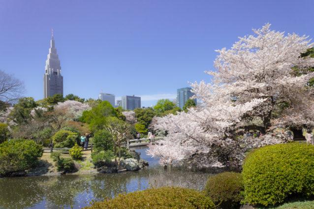 年下女性を誘う東京都内のデートスポットランキング10位:新宿御苑