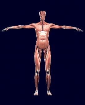 まずは大きい筋肉から中心に鍛える