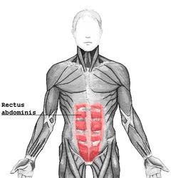 腹直筋を鍛える自宅でできる自重筋トレメニュー3選