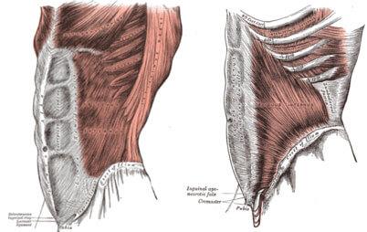 腹斜筋を鍛える自宅でできる自重筋トレメニュー3選