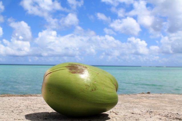 ココナッツ2