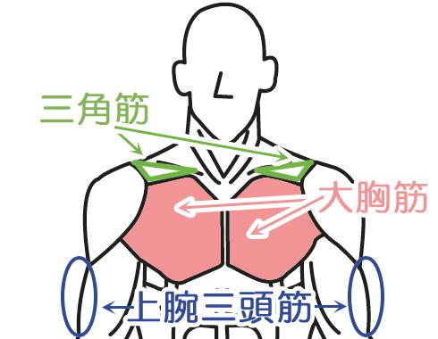 大胸筋 三角筋 上腕三頭筋