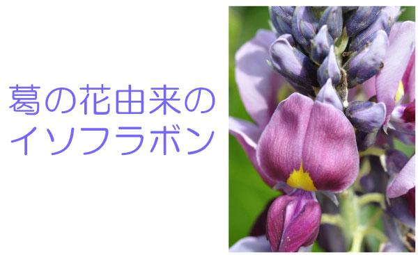 シボヘールの効果の秘密は「葛の花由来のイソフラボン」
