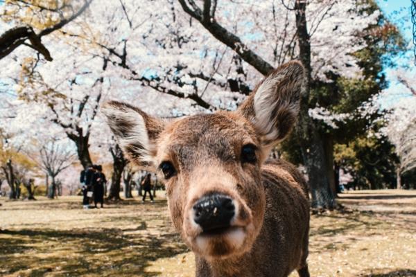 奈良県にあるパーソナルトレーニングジム